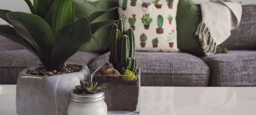 Housplants on a coffee table, Houzz