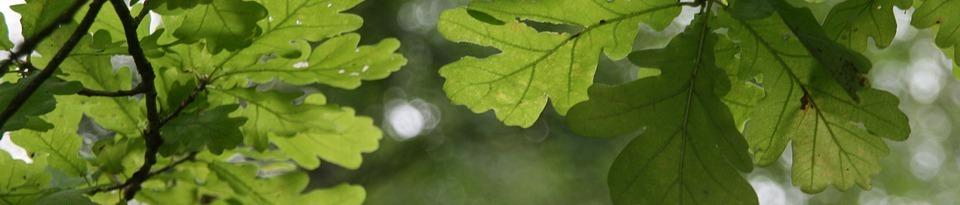 Holiday update | Oak leaves